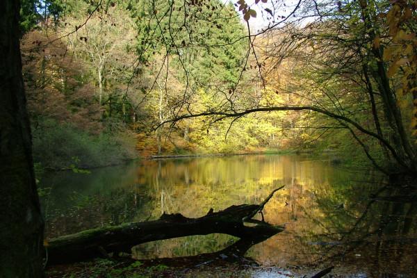 Le sentier de la réserve naturelle Ellergronn