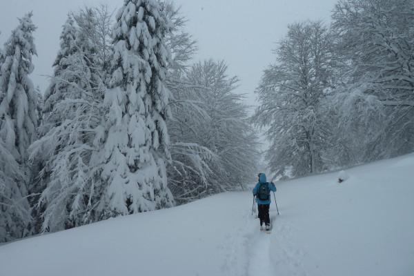 Balade sous la neige en raquettes