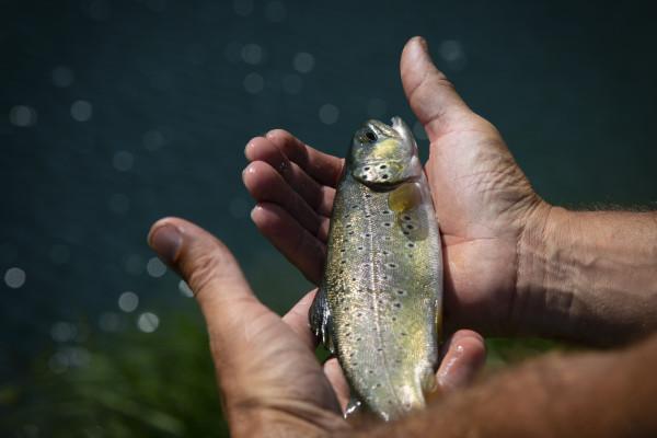 Week-end Pêche en Lac de Montagne et Refuge