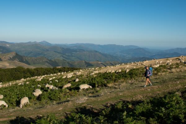 randonnées découvertes classe, classe de montagne, groupe, projet éducatif