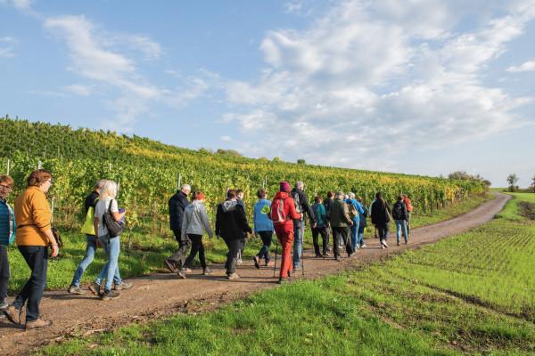 Moselle Flavour - The Walk (dates fixes LU/DE)