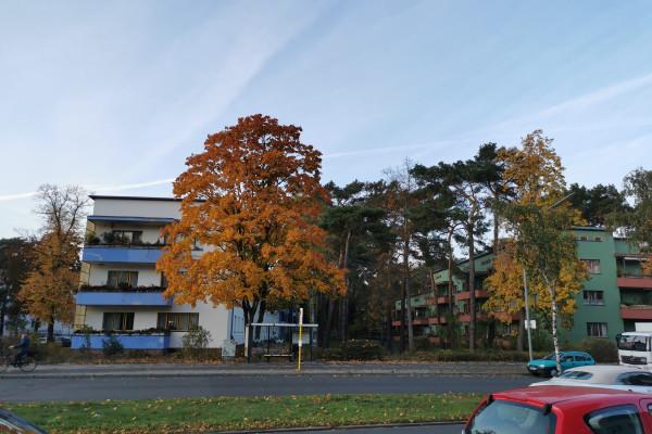 Wohnkultur der Moderne - Zehlendorf