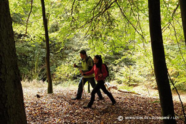 randonneurs dans la forêt