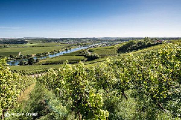 paysage viticole moselle luxembourgeoise
