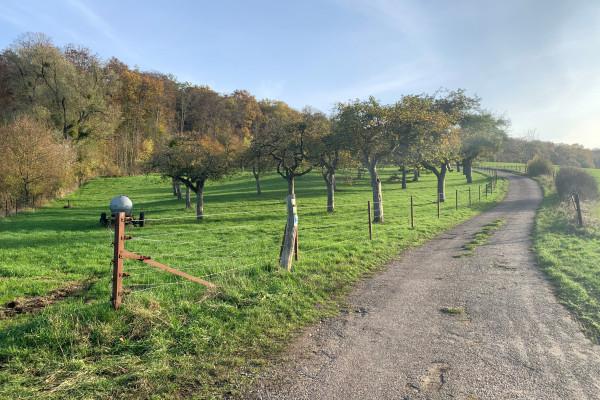 Betzder Panoramatour (auf Anfrage)