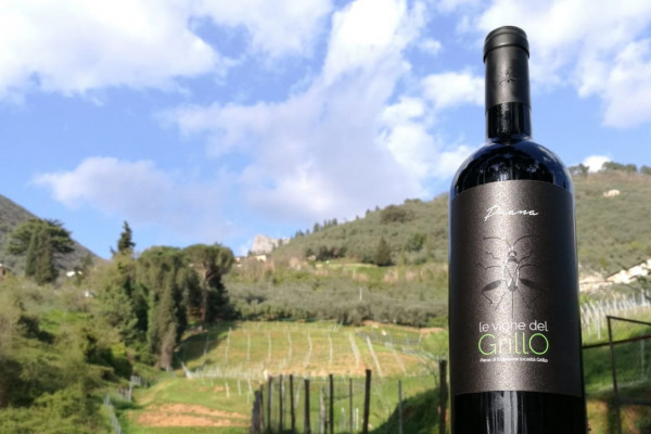 vino degustazione vigna versilia
