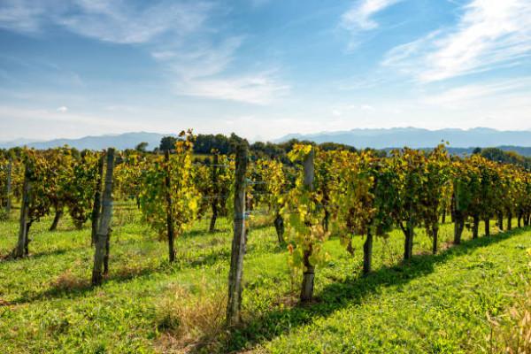 oenotourisme, vin et vignobles