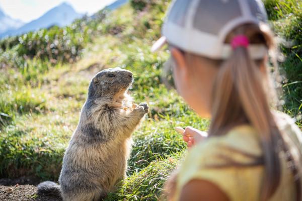 Izards, marmottes, brebis.. toute la faune et la flore des Pyrénées