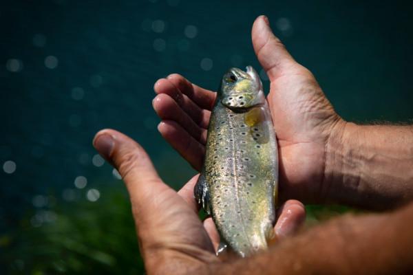 Journée pêche avec un guide
