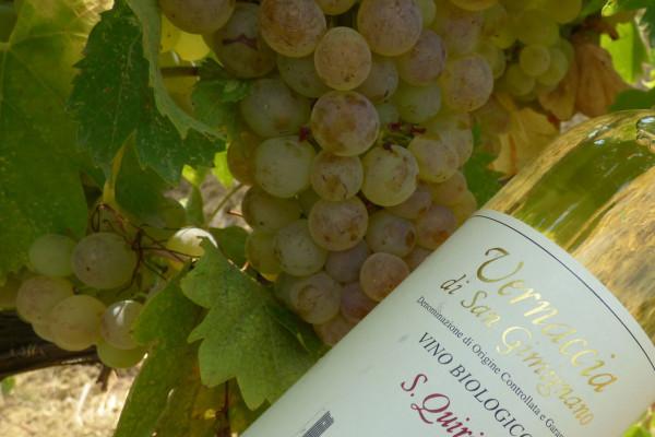 Idea Regalo: Traditional Wine Tour Azienda San Quirico San Gimignano