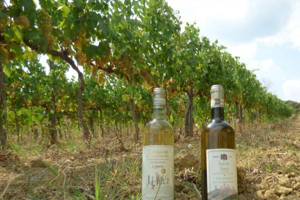 Gourmet Wine Tour a San Gimignano Azienda Agricola San Quirico