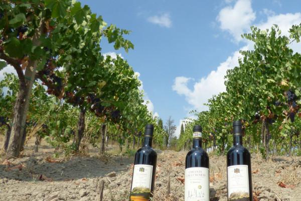 Maxi Degustazione Wine Tour A San Gimignano Azienda Agricola San Quirico