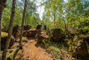 Guided hiking tours through nature reserves