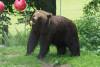 Gift Voucher - Day Pass BEAR SANCTUARY Arbesbach