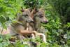 Carer for a day - Parc des Loups