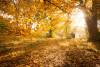 Spaziergang Salzgitter: Skulpturenweg im Herbst