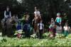 Pferde-Erlebnistage für Kinder