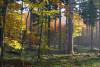 Wildnis-Training im Bayerischen Wald 2 Tage