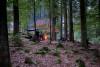 Survival-Training für Erwachsene im Bayer Wald 1 Tag