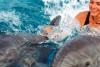 Mit Delfinen schwimmen in Hurghada