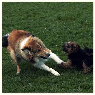 Hundeschule in Argenbühl - Für Hund und Besitzer