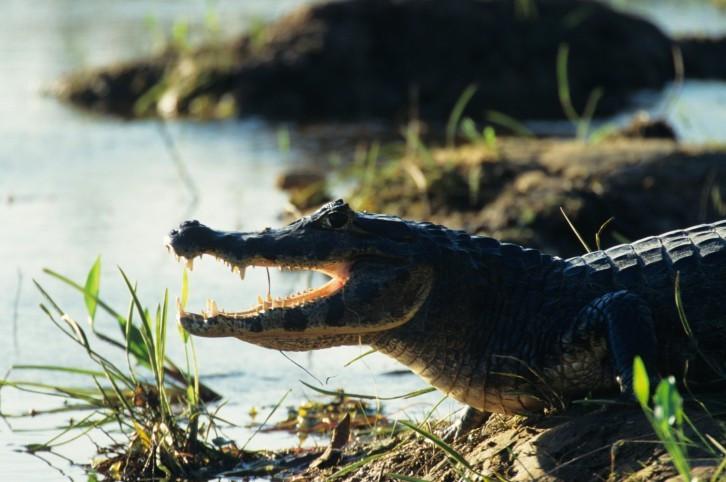 Krokodilstation-Führung in Golzow Brandenburg
