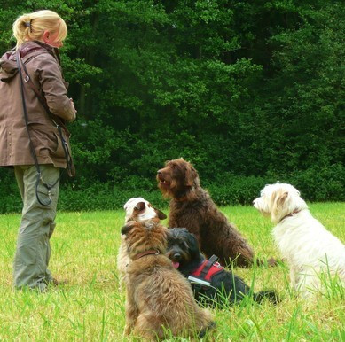 Privates Hundetraining in Hamburg