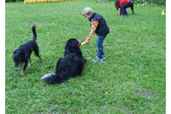 Hundeausbildung Malching