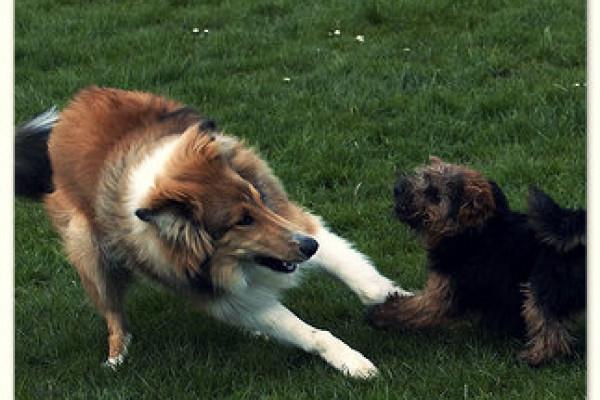 Hundetraining Allgäu