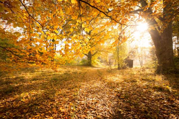 Herbstspaziergang, Foto: Stadt Salzgitter/André Kugellis