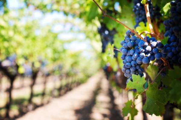 Gutschein für ein Weinseminar für Einsteiger für 2 Personen