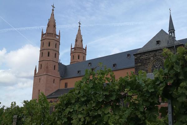 Hier wachsen die Weinreben für die Liebfrauenmilch - im Hintergrund die Liebfrauenkirche