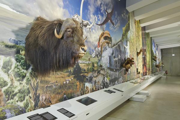 Blick in die Dauerausstellung, Foto: Niedersächsisches Landesamt für Denkmalpflege