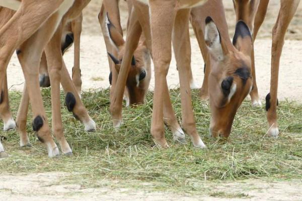 Fotokurs in Hannover: Erlebnis-Zoo