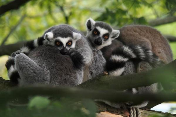 Fotokurs in Munster: Allwetter-Zoo