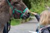 Randonnée d'âne (sur demande)