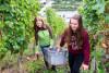 L'ambiance des récoltes (sur demande)