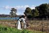 Excursion Saint Honorat: Ile de Lérins et estérel