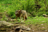 Soigneur d'1 jour - Parc des loups