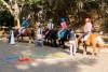 Equitation: Les bébés cavaliers de 2 à 4 ans