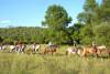 Balade à Cheval - Découverte du Lac de Saint Cassien 2h
