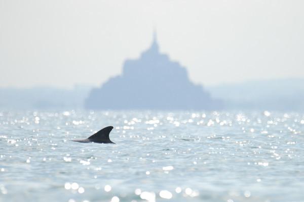 Venez observer la plus grande population sédentaire en Europe de grands dauphins.