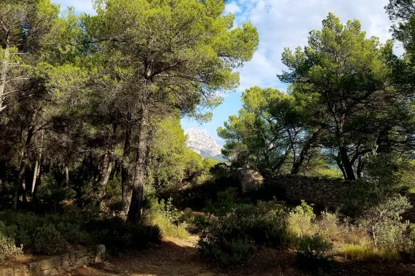 Montagne Sainte-Victoire vue de Bibémus