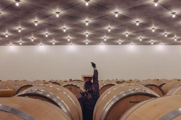 Dégustation de vin à la barrique