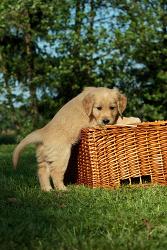 Hundeschulen für Welpen in Bochum